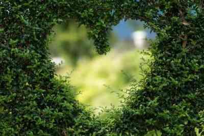 El amor es el pilar principal de la Crianza y la Educación